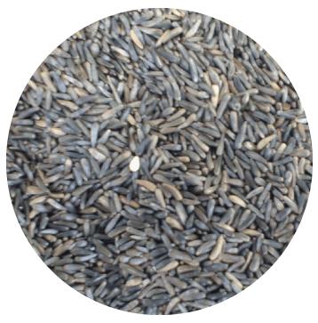 niger-seed-circle